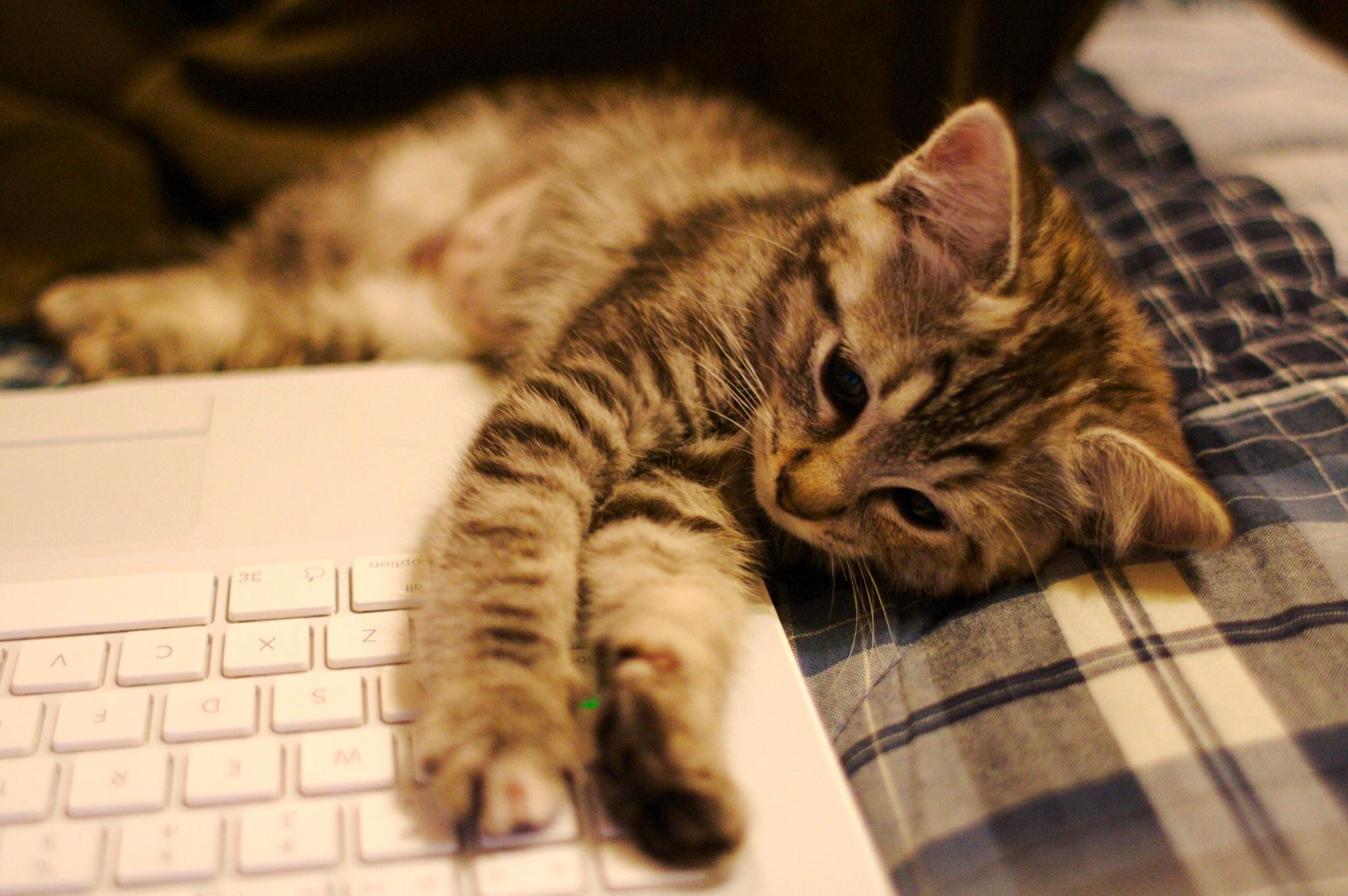 Сайт с непрерывным кошачьим мурчанием появился вглобальной паутине